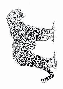 Dessin Jaguar Facile : coloriage de leopard sur ~ Maxctalentgroup.com Avis de Voitures