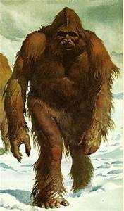 Bigfoot: The missing link? Reports of this large ape-like ...