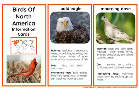 45 animals of north america nomenclature and information