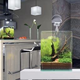 welches glas für aquarium welches aquarium kaufen welches aquarium kaufen modern xx aquarium kaufen hamburg a aquarium