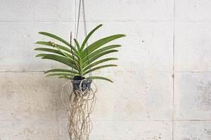 Anthurie Blüht Nicht : orchidee bl ht nicht so regen sie sie zum bl hen an ~ Frokenaadalensverden.com Haus und Dekorationen