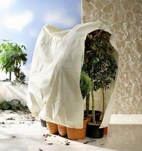 Oleander Draussen überwintern : pflanzen berwintern die richtige berwinterung pflegen schneiden veredeln green24 ~ Eleganceandgraceweddings.com Haus und Dekorationen