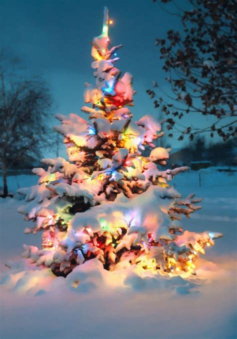 10 natural outdoor christmas tree decorations home