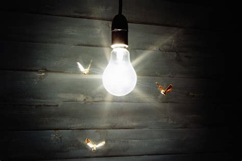 why are bugs attracted to light why are bugs attracted to lights
