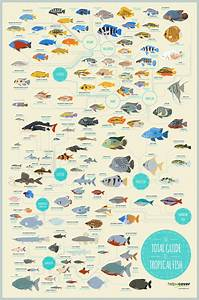 The Total Guide to Tropical Fish #infographic | Tropical ...