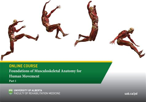 Introduction to MSK Anatomy for Human Movement   Faculty of Rehabilitation Medicine