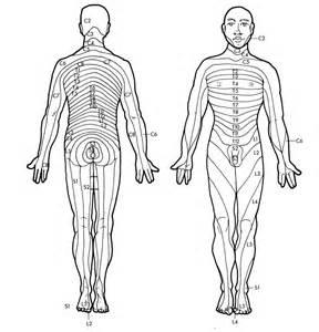 Dermatome Chart Black and White