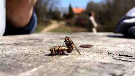 Fly Sex Slow Motion Youtube
