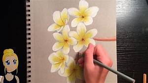 How To Draw Realistic Flowers  With Colored Pencils