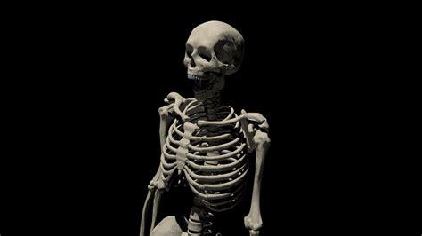 Halloween Skeleton Wallpaper 65 Images