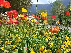 Bilder Blumen Kostenlos Downloaden : bunte blumen kostenlose bilder ~ Frokenaadalensverden.com Haus und Dekorationen