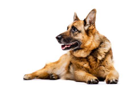 mon chien fait pipi sur les tapis mon chien fait pipi dans la maison comportement du chien education chiens