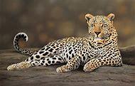 Wildlife Animal Paintings