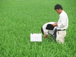 RIICE Vietnam partner IMHEN conducting fieldwork in order ...