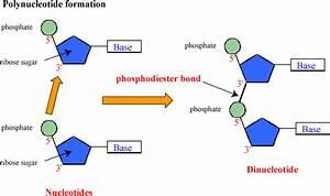 Biochemshariestar