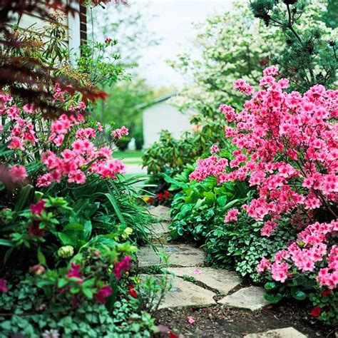 growing conditions for rhododendron 25 early spring flowers for your garden