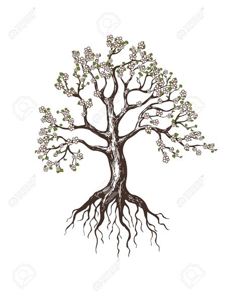 apple tree with roots drawing roots tree illustration pencil and in color