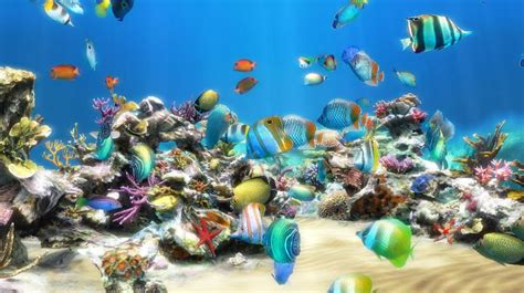 support ecran pc bureau live aquarium hd software informer screenshots
