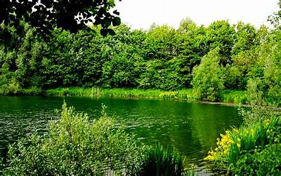 Greenery Tree Wallpapers Nice Grass Forest Lake