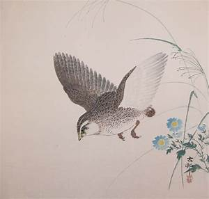 Koson: Quail in Flight - Ronin Gallery - Ukiyo-e Search
