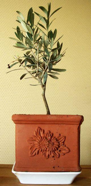 17 meilleures id 233 es 224 propos de olivier en pot sur pots 224 billes peinture pour le