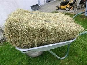 Heu Kaufen Für Pferde : bio heu kleine heuballen kleine hmdballen stroh ab 3 eur in ebersbach pferde kaufen und ~ Orissabook.com Haus und Dekorationen