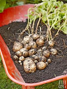 What You Need To Know About Growing Potatoes