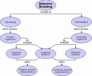 Selective Breeding Flowchart