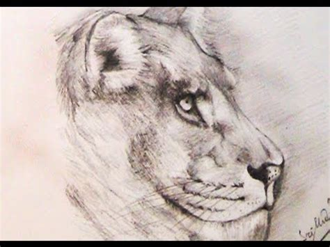 draw  lion  pencil youtube