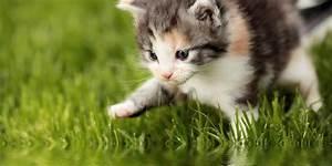 Wie Teuer Ist Parkett Abschleifen : was kostet eine katze bersicht und checkliste f r die ~ Michelbontemps.com Haus und Dekorationen