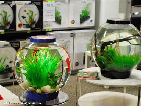 aquarium ideal pour combattant photos poissons combattants du betta club de forum poissons