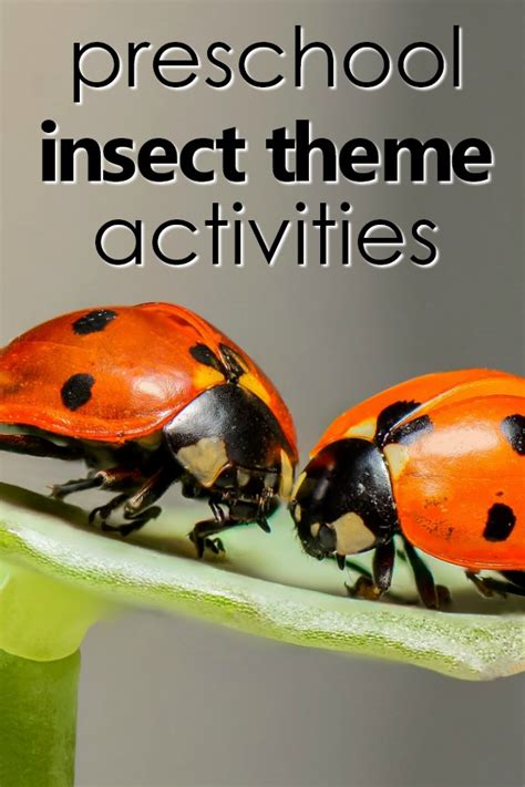 insect theme preschool activities fantastic amp learning 970 | preschool insect theme pin1