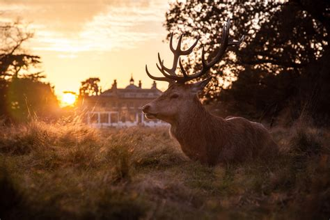 interesting photo   day deer  sunset  bushy park