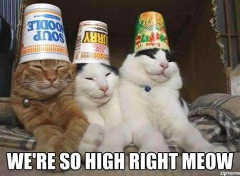How High Get Em Meme - we re so high cat meme cat planet cat planet