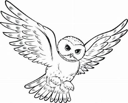 Owl Coloring Flying Printable Easy Hard