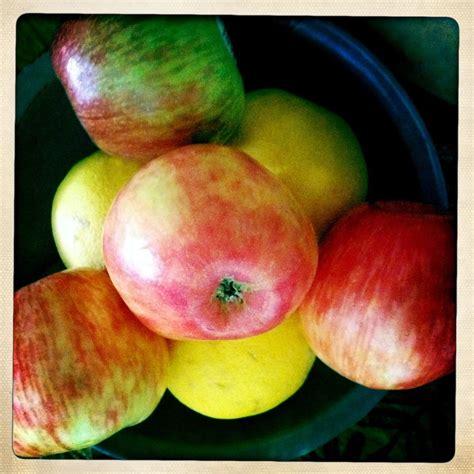 fruit bowl fruit fruit bowl mango