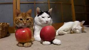 Abnehmen durch äpfel