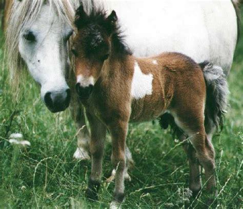 adorable ponies images  pinterest beautiful