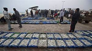 Red Resume Israel Allows Gaza Fish Exports To Resume