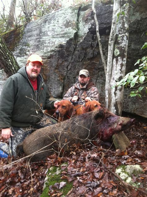wild boar caryonah hunting lodge