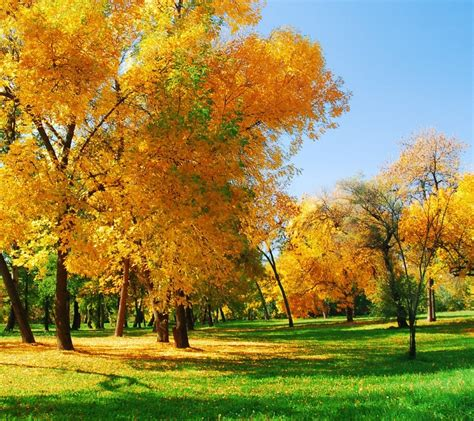 Animated Autumn Wallpaper - autumn screensavers and wallpaper wallpapersafari
