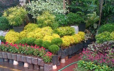 penjualan bunga hias kota jayapura meningkat jelang natal