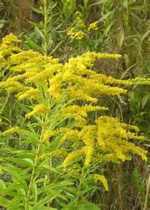 pflanzen fã r badezimmer unbekannte pflanzen natur garten pflanzenbestimmung pflanzensuche green24 hilfe pflege bilder