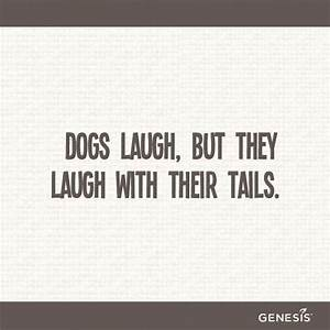 dog quotes on Tumblr