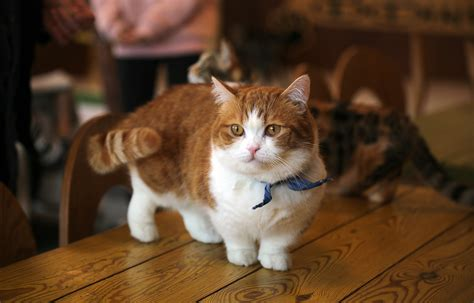 cat breeds stay print paw