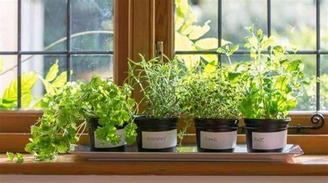 Homesteading Indoor Gardening Tips