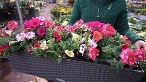 Blumenkästen Bepflanzen Sonnig : prachtvolle sommer balkonk sten einfaches bepflanzen von lechuza balkonk sten youtube ~ Frokenaadalensverden.com Haus und Dekorationen