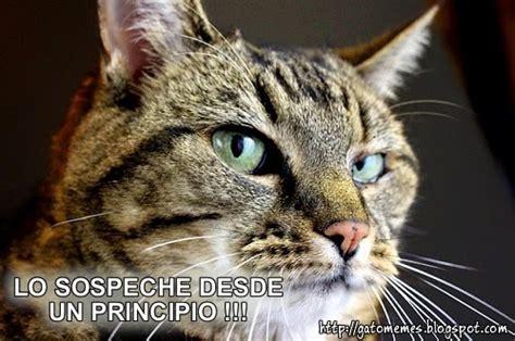 Memes De Gatos - pin gatos graciososjpg on pinterest