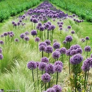 Graminées Vivaces Hautes : jardin du ch teau du rivau garden provence pinterest ~ Premium-room.com Idées de Décoration