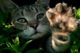 cats paw cat s paw already impacting fmla claims fmla insights